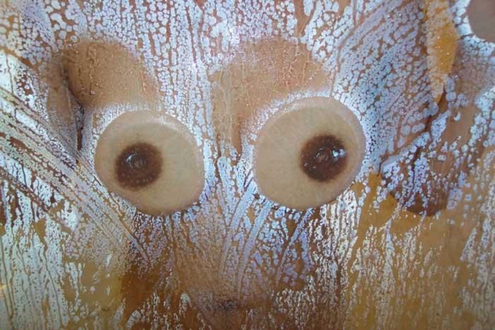 【おっぱいエロ画像】ガラスに押し付けたおっぱいが異常なほどエロい!ひんやりエロいつぶれ乳首やおっぱいの画像を集めてみました。 50